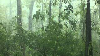 Foggy Mountain Rain - 2 Hour Relaxing Sound of Raining in Fog