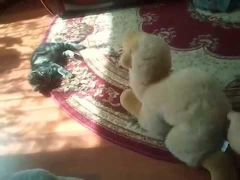 Kot atakuje