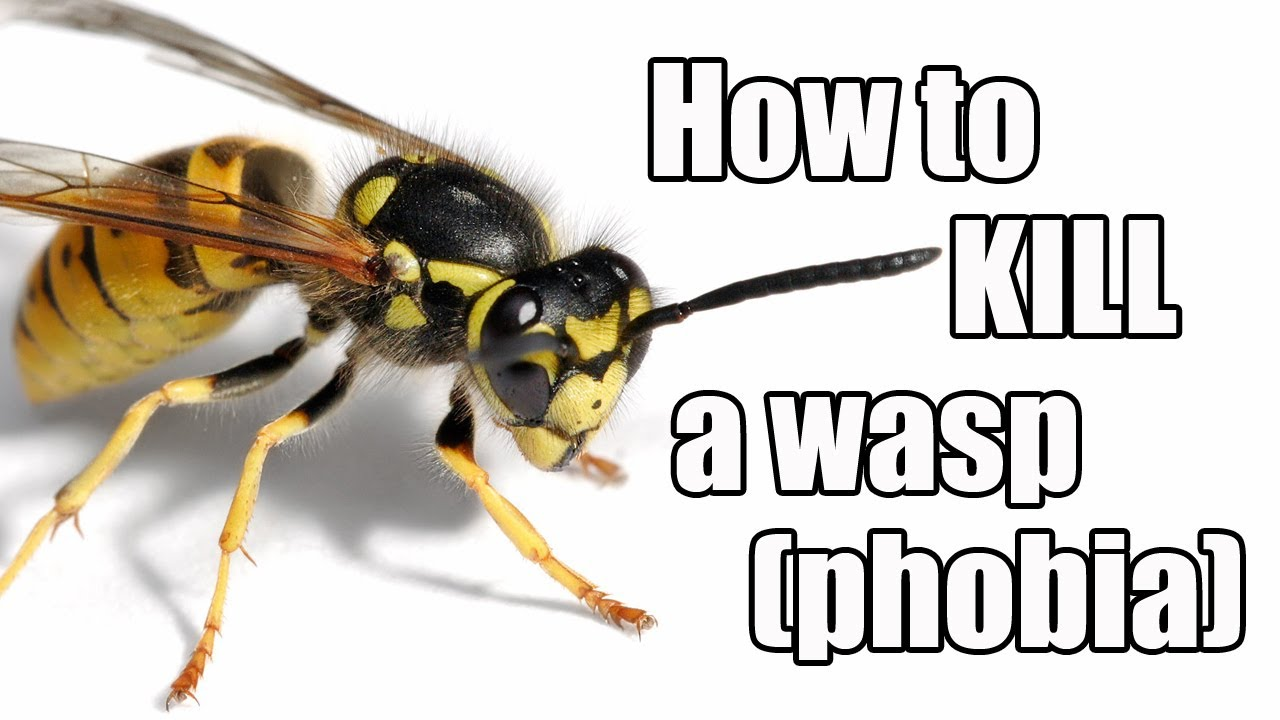 Episode #21 - How to kill a wasp (phobia) - YouTube