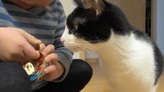 おやつがつなぐ、猫とこども A food connects with a cat and a child