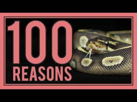 100 Reasons Snakes Make Great Pets