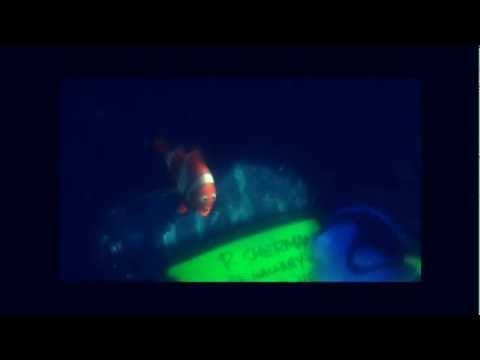 P Sherman, 42 Wallaby Way, Sydney - Dory (Finding Nemo 2003)
