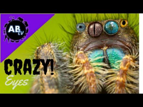Crazy Eyes! : 5 Weirdest Animal Facts : AnimalBytesTV
