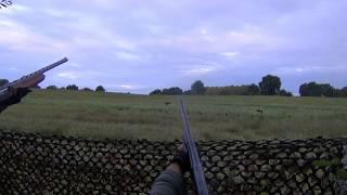 chasse corbeau/crow hunting