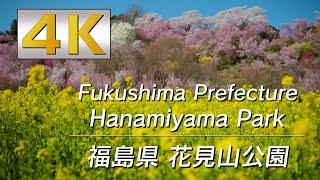 4K 福島県花見山公園-Hanamiyama Park