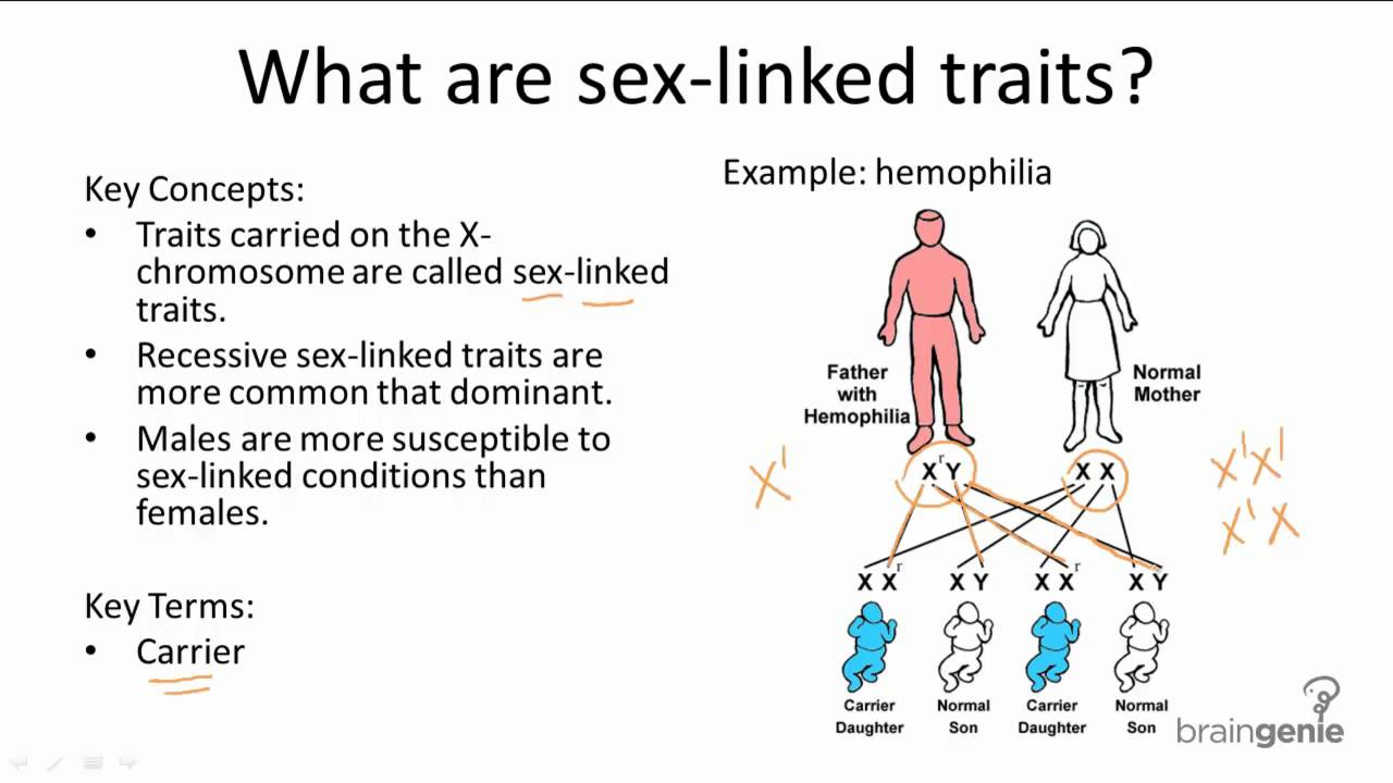 Are sex linked traits dominant or recessive