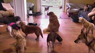 Senior Dog Gathering Room Cam 03-21-2018 08:51:06 - 09:51:07