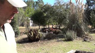 How to trim or burn Pampas Grass. Two Ways To Trim Pampas Gras Part II