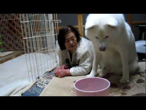秋田犬のオヤツと秋田のお婆ちゃん【akita dog】