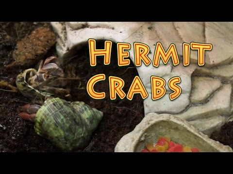 Hermit Crab Care & Habitat