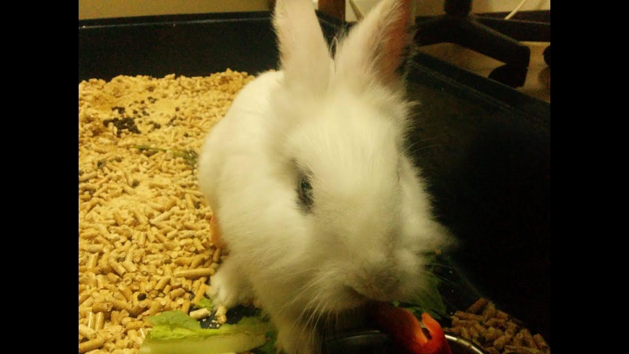 Angry Bunny (Rabbit Attack) - YouTube