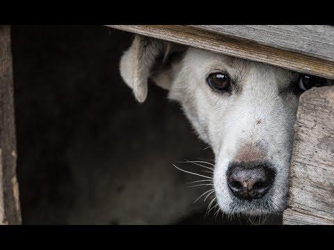 Как я пряталась в будке цепного пса…