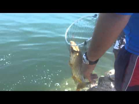 рыбалка на средиземном море на удочку