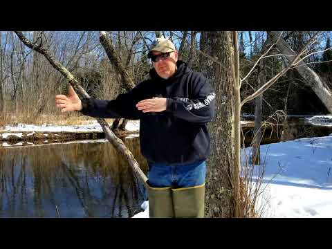 how to trap beaver in the spring with castor mound sets