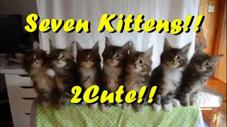 A Bunch Of Cute, Adorable Kittens! 😍 2Cute & Adorable!! ☺