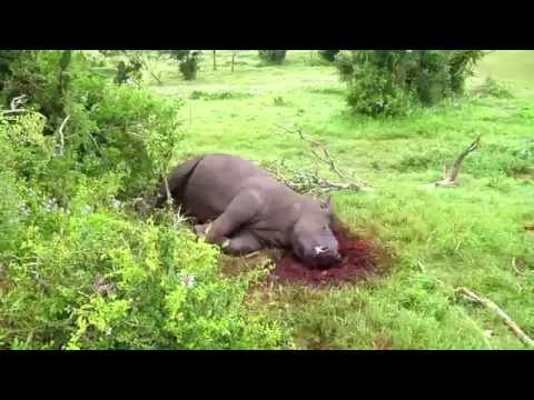 Brutal poaching of Kariega Game Reserve rhino's - Thandi and Themba