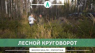 Лесной круговорот