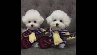 Funny Cats and Dogs Video