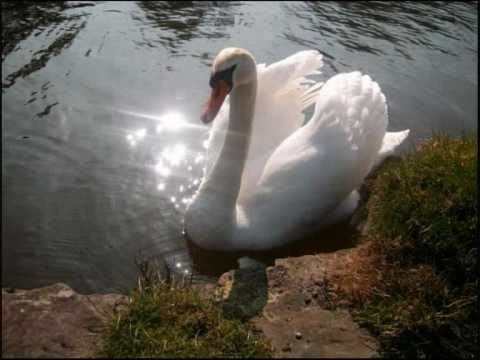 BLACK SWAN LANE -tired- from  A LONG WAY FROM HOME album  2007.wmv Music Videos