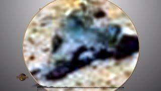 Mountain Lion on Mars?