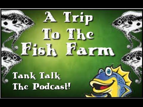 A Trip To The Fish Farm! Tank Talk The Podcast!!