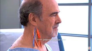 Examination of the jugular venous pulse