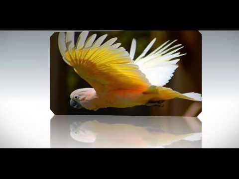История любви попугая Кеши