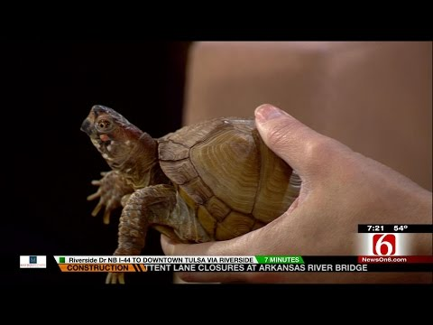 Wild Wednesday: Looking Out For Nature In Your Own Backyard
