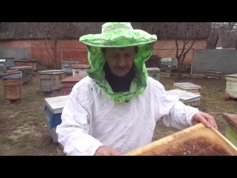 где поймать рой пчел
