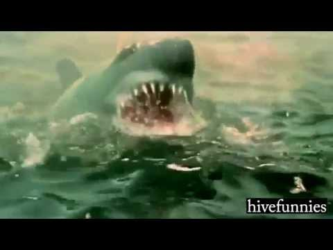 The Jaws  - Shark attack Bollywood style.