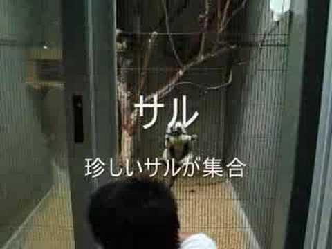 浜松市動物園 ナイトズー