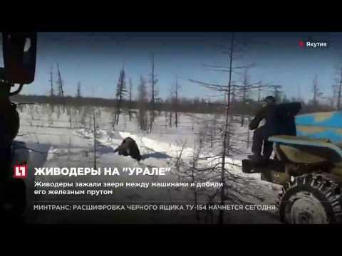 В Якутии ищут живодеров жестоко убивших медведя