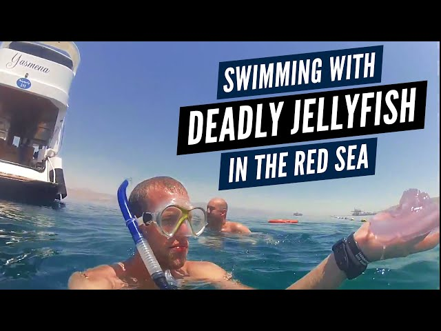 Overcoming Fears &amp; Deadly Jellyfish In The Red Sea