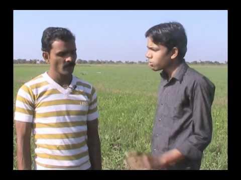 Mixed Cropping with Wheat Hindi Access Madhyapradesh