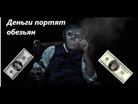 ДЕНЬГИ ПОРТЯТ ОБЕЗЬЯН!