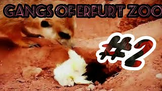 """Gangs of Erfurter Zoo"" Part II - The Meerkat"