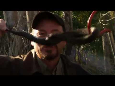 Striscia la paura: a caccia di pitoni in Louisiana