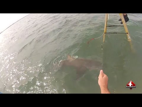 Extreme Shark Fishing with Team Rebel