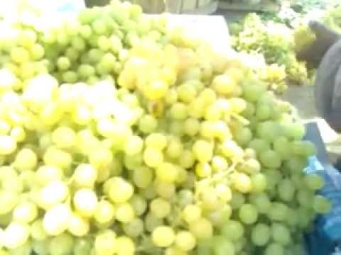 Grapes of Balochistan Mnr