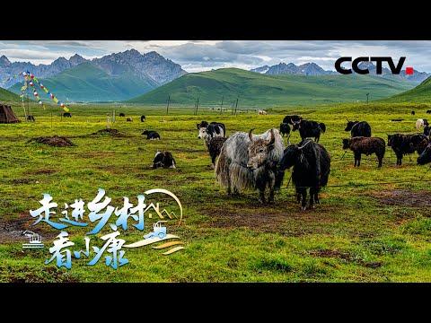 中國-走進鄉村看小康