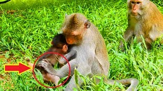 Ah! Why Mommy Use Leg Kick Baby While Peter Cute Baby Hungry Sweat Milk!