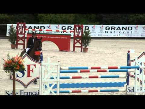 Khan Des Grez (webstallions) video