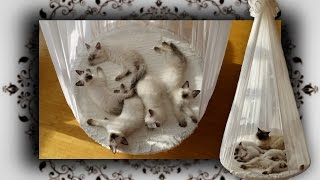 DIY 😻 Himmelbett für Katzen | poster bed for Cats