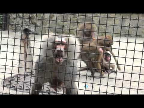 Ялта зоопарк 2012