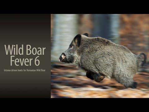 Wild Boar Fever 6 - Trailer 1 - Hunters Video video