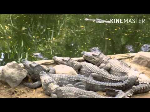 Madras Crocodile bank, Chennai tourism