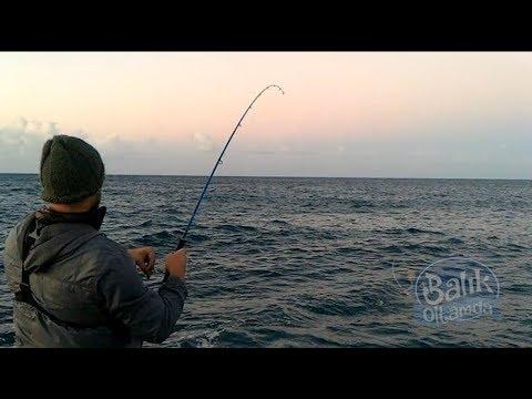 Atçek hakkında bilgi verirken gelen kuzu balığı