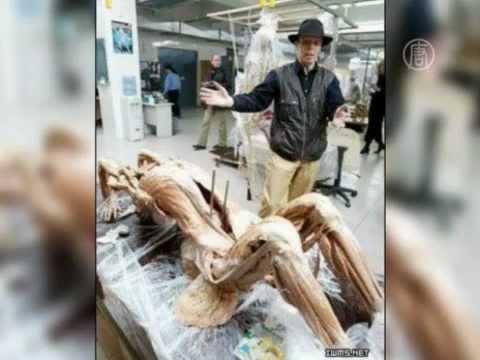 Торговлю телами обсуждают в Интернете в КНР