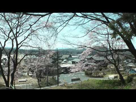 恵那市 「乗政寺山」 ~大名桜~