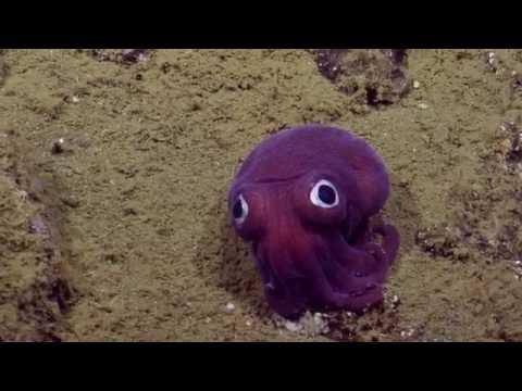 Un calamar que parece un juguete revolucionó a la ciencia y es furor en las redes sociales